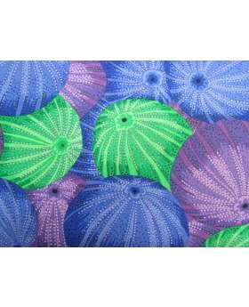 Philip Jacobs Sea Urchins- Blue