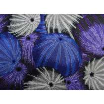 Philip Jacobs Sea Urchins- Grey